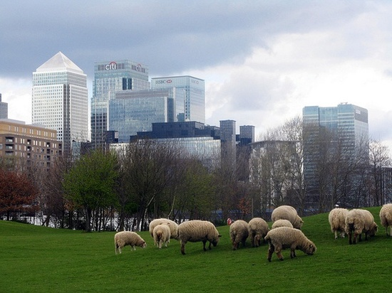 sheepcanarywharf